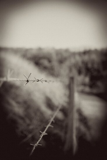 Barbed by Mike Weeks