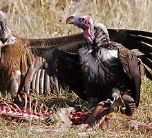 Vultures - Zambia by Marieseyes