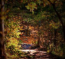 Dark Path by Chip  Ford
