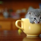 kitty in the cup by elisaperusin