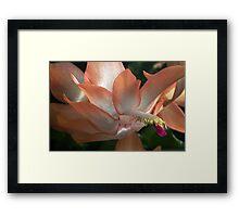 Peach beauty Framed Print
