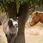 Horsing Around by Tracy Riddell