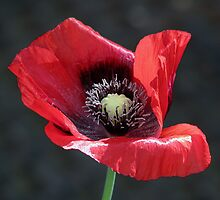 We remember  by Sharon Perrett