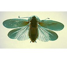 Blue Moth Photographic Print