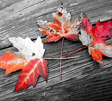 Selective Leaves by Veronica Schultz