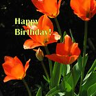 Fresh Birthday Tulips by Betty Mackey