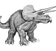 Triceratops (pencil) by Jan Szymczuk