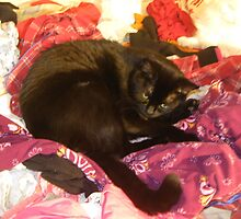two cats love my warm laundry by Nora Fraser