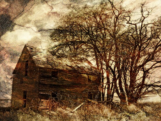 The Homestead Series:  Twister by Aimee Stewart