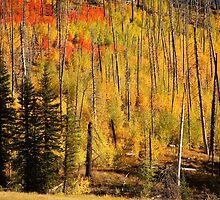 Fall Colour at Grand Canyon, North Rim by Olga Zvereva