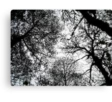 treetops 3 Canvas Print