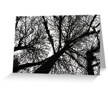 treetops 2 Greeting Card