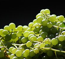 Green Grape Harvest by sbm-designs