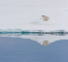 Polar bear pretending we are not there... by Phil Bain