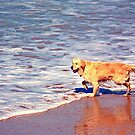 A dog to be happy to be at the beach by Sarah  Lawrence