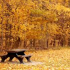 Autumn Day at the Park by Sandy Woolard