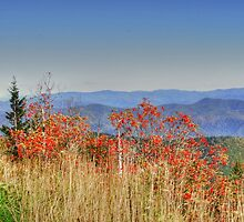Clingmans Dome by Ladona
