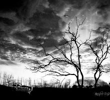 San Jacinto (Desert Sunset) by Rhonda Strickland