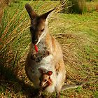 Wallaby and her Joey by Samantha  Goode