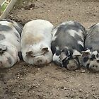 sleeping pigs by suebeauchamp