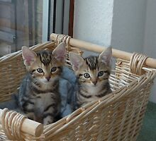kittens in a basket by suebeauchamp