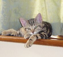 lazing kitten by suebeauchamp