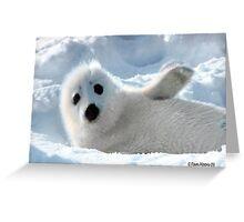 a Cute Seal Pup Greeting Card