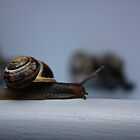 Snail by JM-Photography