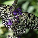 Beautiful Butterfly Calendar by BobJohnson
