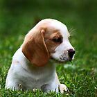 Puppy in the Grass by Peggy Berger