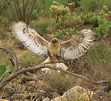 Ferruginous Hawk ~ Kachina Dreams by Kimberly Chadwick