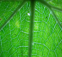Green leaf (series)!... by sendao