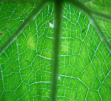 Green leaf (series)!... by sendao