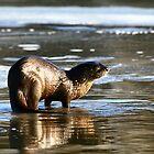 """  River Otter  "" by fortner"