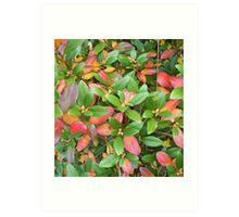 Autumn Bouquet - Rhododendron Art Print