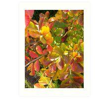 Autumn Bouquet - Crepe Myrtle Art Print