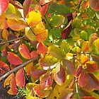 Autumn Bouquet - Crepe Myrtle by WalnutHill