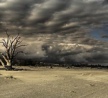 Dead Trees on the beach of Lake Bonney by Glen  Cooper