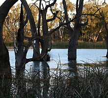 Barmera, South Australia by Robyn Jolly