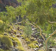 Ghost Gum at Ormiston Gorge by pennyswork