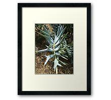 Encephalartos horridus Framed Print
