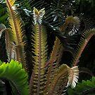Encephalartos woodii by TaiHaku