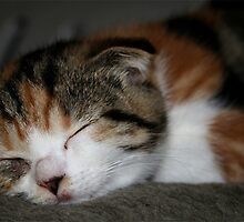 Another sleeping kitty... by SusiBloeck