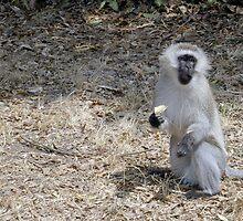 Monkey II by Lindsey Van Nuil