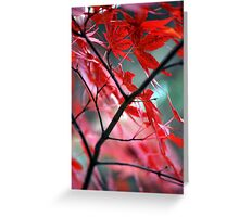 Fall Focal Point - Red Greeting Card