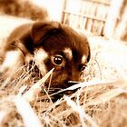 Chucky Puppy... by Jarrod Lees
