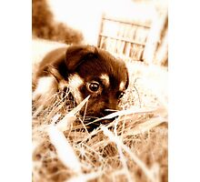 Chucky Puppy... Photographic Print