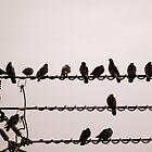 Pigeons by katpix