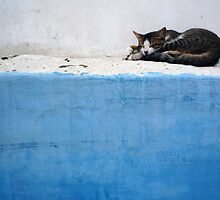 Morocco, October 2008 by Michael Sissons
