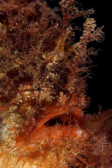 Tasselled Anglerfish by MattTworkowski